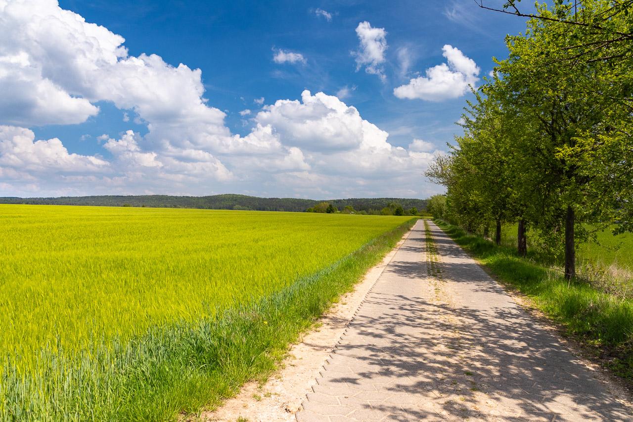 Weg zu den Schafen gleich nach Moggendorf