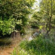 Die Wiesent ruhig fließend hinter dem Garten